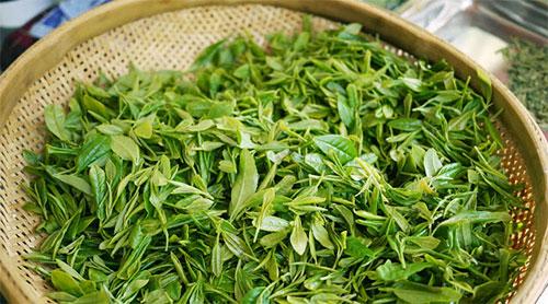 Japanese Green Tea Wholesale